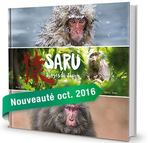 Saru Singes du Japon
