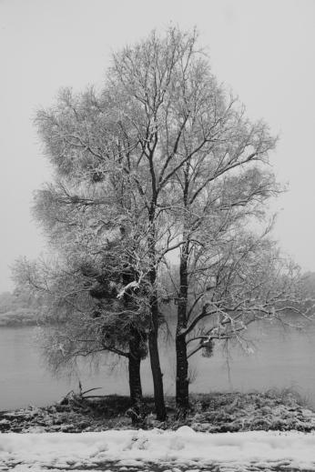 neige_fevrier_2018_09
